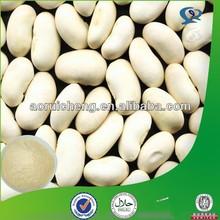 supply chinese new crop white kidney bean