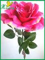 моде светло-вишневый цвет цветов описание розы