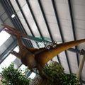 Parc d'attractions noms dinosaure drôle pour la vente
