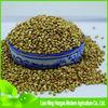 buy green raw buckwheat