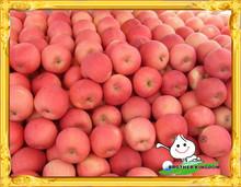 Red fresh fuji apple low price/Chinese red fuji apple/Fresh red sweet apple