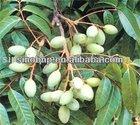 BNP Manufacturer supply olive leaf extract,olive leaf extract as herbal medicine