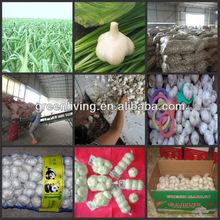 garlic 2014 market price / China Garlic Capital