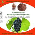 de uva orgánica extracto de la semilla