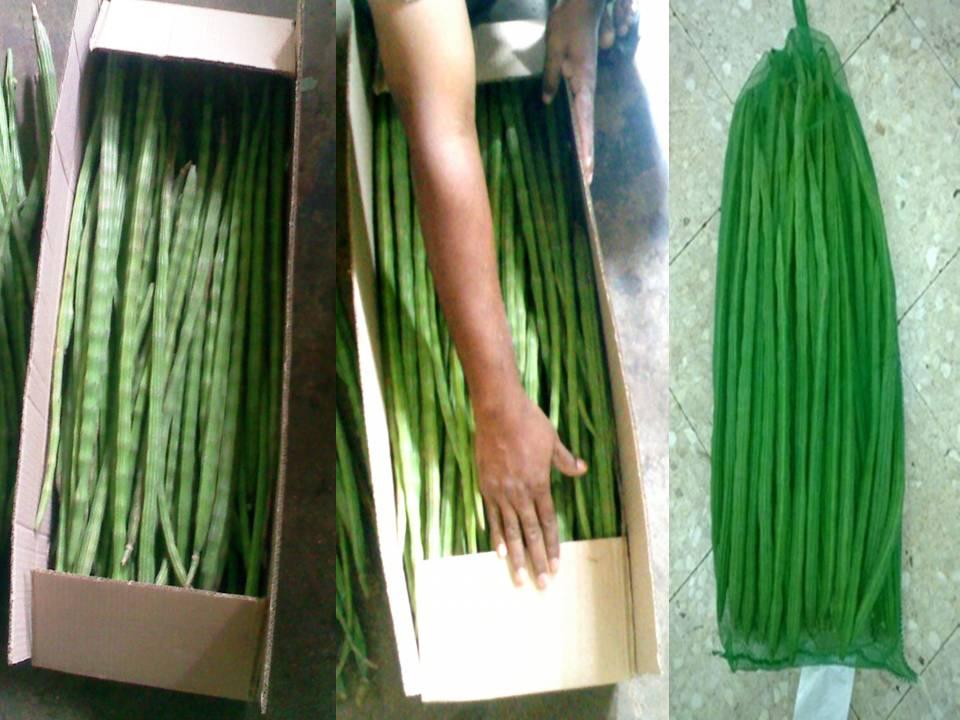 Promotional Vegetable Drumstick, Buy Vegeta