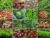 indian vegetables for fruits