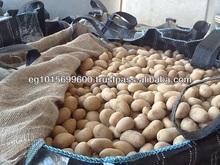 Fresh Egyptian Potato