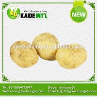 2014 fresh chinese yellow potato big size (75-100gram)(100-150gram)(150-250gram up)