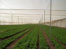 Anti Virus Net 50 mesh for greenhouses