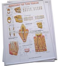 3D PVC cartel Made in China para los niños educativos, Carteles de motivación, Uñas posters