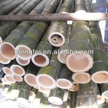 green bamboo poles
