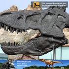 My Dino-Fiberglass dinosaur indoor playground anatomical specimens