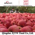 fresca de manzana de azúcar de la fruta para la venta