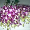 wholesale fresh cut orchid flowers