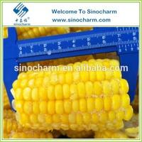 Supply Frozen Organic Sweet Corn Cob From China