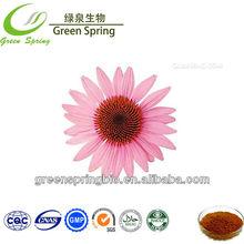 Organic Echinacea Extract/Echinacea Purpurea Extract/Polyphenols with free sample,China herb medicine
