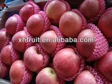fresh qinguan apple fruit price