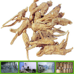 Dong quai extract ligustilides nature angelica extract