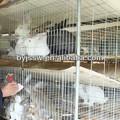 eti tavşan çiftlikleri kafesleri