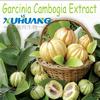 2014 herbal medicine Hydroxy Citric Acid , Garcinia Cambogia Extract