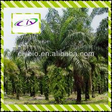 saw palmetto extract fatty acid extract