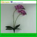 decorativa nomes científicos de flor