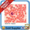 Blood smear histology slides set of 10