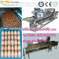 Clasificación de huevos / limpieza / velas / máquinas de envasado
