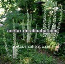 Pure nature Black Cohosh P.E .BLC-Tritepene2.5%,8% HPLC