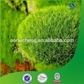 Natural orgânicos e ácido úsnico extrato, o ácido úsnico pó do extrato, o ácido úsnico 98%