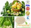 Garcinia Combogia Extract 50%,60%,70% / Garcinia cambogia Powder