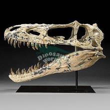 Indoor Animatronic Dinosaur Resin Skull Model