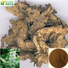 manufacturer supply 100% natrue black cohosh root extract powder capsule