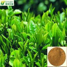 Green Tea Extract/ Green Tea Catechins & Green tea Polyphenols