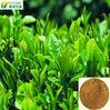 Green Tea Extract 98% Polyphenols, 80% Catechins, 60% EGCG, 0.5% Caffeine