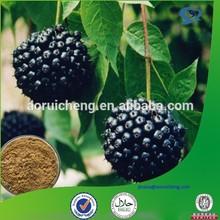 100%Natural Siberian Ginseng P.E. Eleutherosides B+E 0.8% 1% 1.2% HPLC-63-8