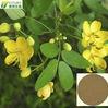 ISO certificated powdered extract semen cassia tora
