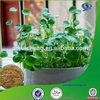 GMP manufacturer top quality asiatic acid powder from gotu kola seed