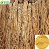 0.6%-1% Ligustilides fine powder Radix Angelicae Sinensis P.E.
