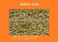 Barley Fodder seed