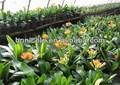 escolha adequada do solo pelotas adubo orgânico para o canteiro de flores de orquídeas e plantas artificiais