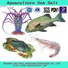 Sea Horse Aquaculture Sea Salt For Lobster Shrimp Farming