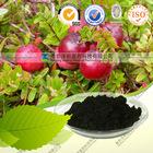 Top quality Cranberry P.E 50%