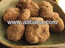 Truffle Mushroom Keme Geme Terfeziaceae Desert Truffle