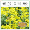 Wild Chrysanthemum Flower Extract,Total Flavones 3%