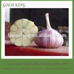 China farm fresh organic garlic wholesale price