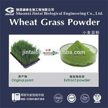 ISO certified 10:1 20:1 organic wheatgrass powder