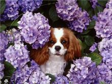 Funny dog with purple flower world 3d framed art