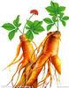 100% natural pharmaceutical ginseng extract powder ginsenosides