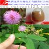 High Quality Mimosa Hostilis Root Bark